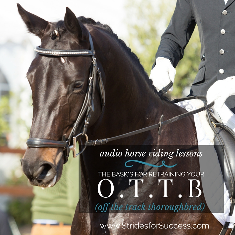 Basic Exercises for your OTTB (Off the Track Thoroughbred)