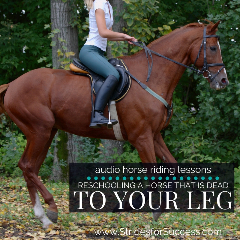 Reschooling a Horse that is Dead to Your Leg
